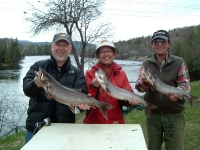 Gray Trout 2007